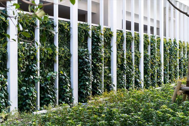 壁面緑化にはどんな効果があるの?自宅を緑でいっぱいにできる?